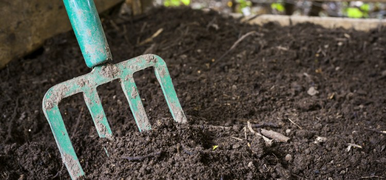 How To Use Mulch In The Garden – The Secret To Weed Free Success!