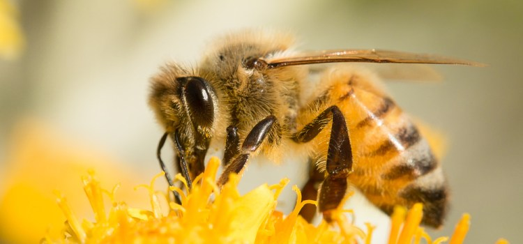 The Struggle To Keep Our Bees. What Is Really Happening To Honeybee Hives?