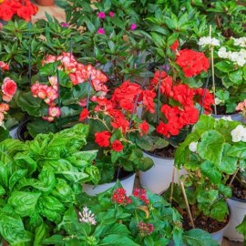 Container Gardening Secrets – 6 Tips For Gorgeous Pots, Containers & Baskets!