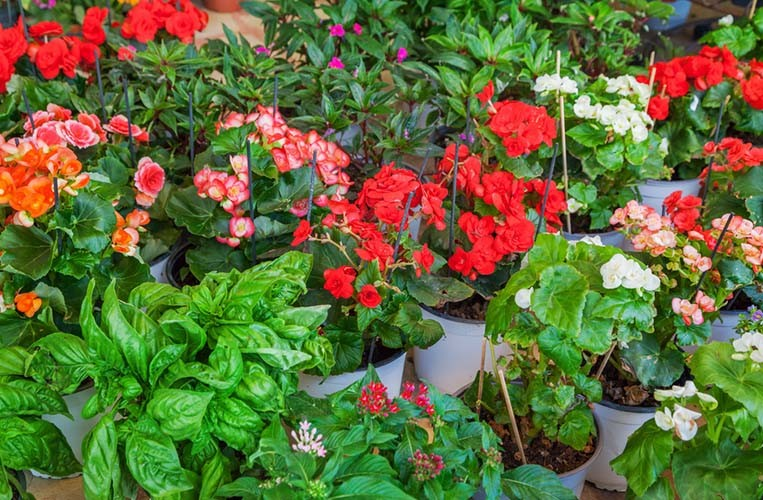 Container gardening secrets 6 tips for gorgeous pots - Container gardening basics ...