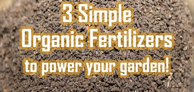 3 Simple Organic Fertilizers That Can Power Your Garden!