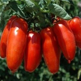 5 Perfect Tomatoes To Grow That Will Feed Your Family & Stock Your Pantry!