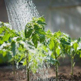 Watering The Garden – How To Avoid The 3 Most Common Mistakes!