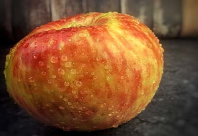 planting apple trees
