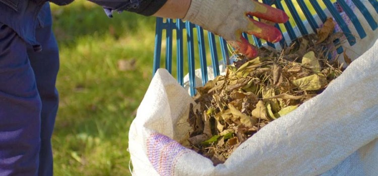 Composting Leaves – How To Make Great Compost From Leaves This Fall