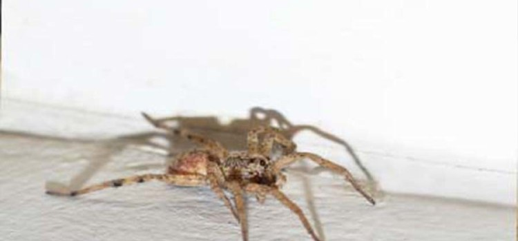 10 Natural Methods To Deter Spiders From Your Home