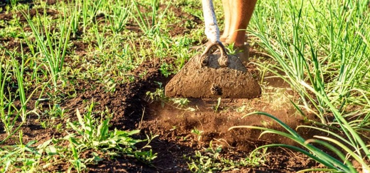 Weed Free Garden Secrets – 3 Tips To Eliminate Weeds!