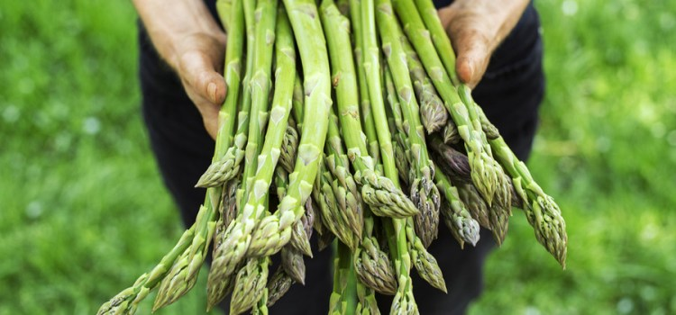 Growing Asparagus – How To Plant, Harvest and Maintain A Great Crop!