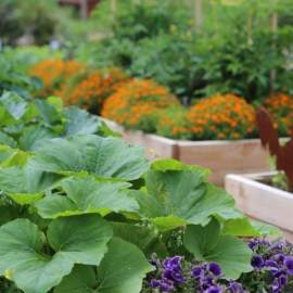 5 Secrets To Fertilizing Vegetable Plants And Flowers – Grow Big Naturally!