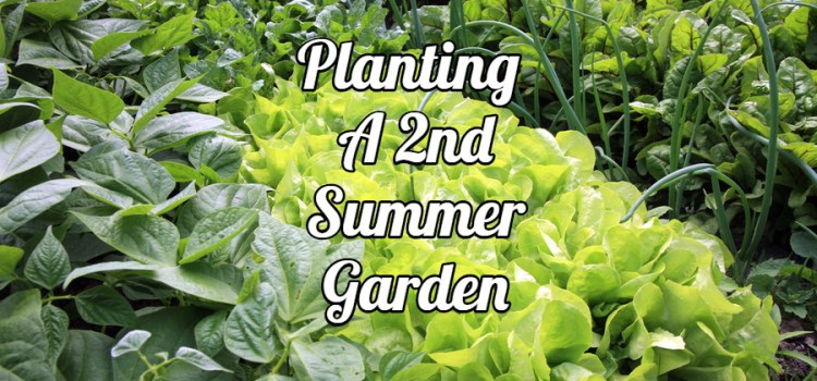 Planting A Summer Garden – How To Create A Fresh Fall Veggie Harvest!