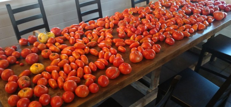 An Incredible Record Setting Harvest – Raised Row Garden Magic!