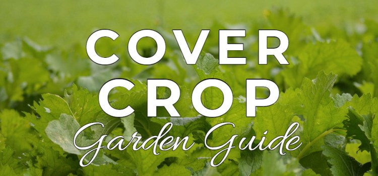 The Ultimate Cover Crop Guide : 7 Great Choices To Recharge A Garden!