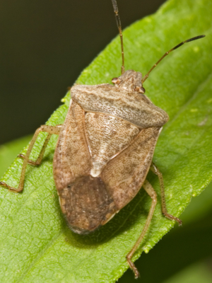 keep stink bugs out