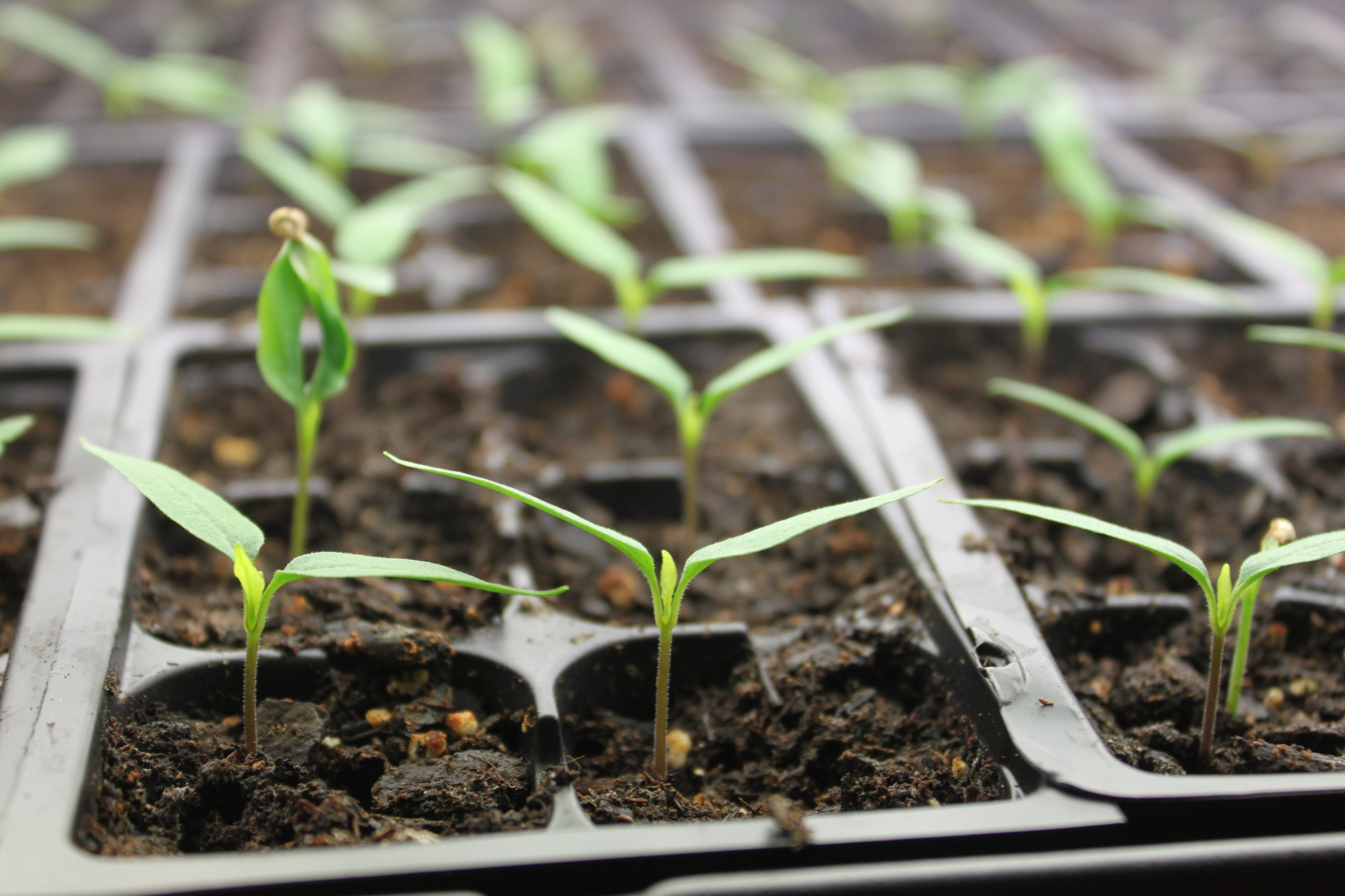 How To Save Seeds From The Vegetable Garden