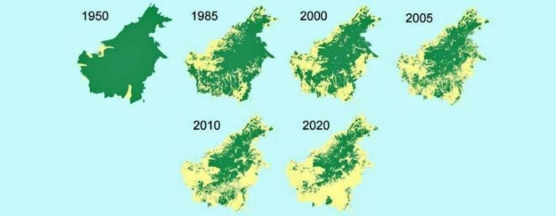 Issue with palm oil