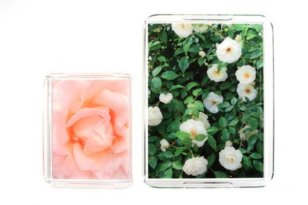 garden rose trays
