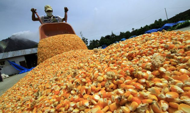 Exige el Verde reconsiderar el incremento al precio del maíz
