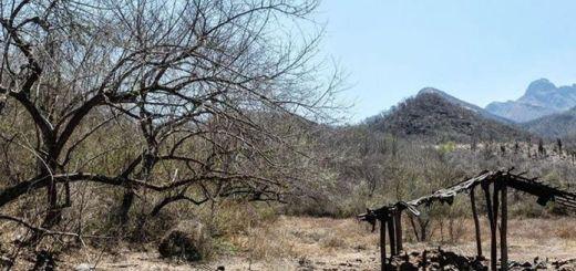 Más de 200 hectáreas arrasa incendio forestal en el municipio de Sinaloa