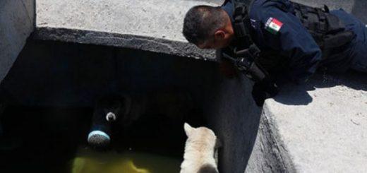 Caninos son rescatados por elementos de la SSPyTM