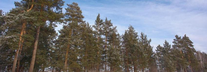 Лес и небо, Олег Чувакин, рассказ Марта