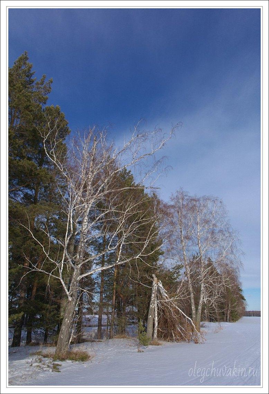 Небо, снег, солнце, фото, Олег Чувакин, 01