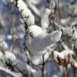 Снег на ветках сирени, октябрь, фото