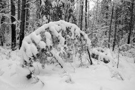 Зима, январь, лес, фото, 2016, Олег Чувакин