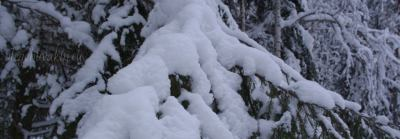 Зимний лес, снег, фото, этанол, монополия на спирт, Россия, министерство финансов, 2016