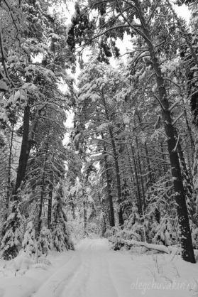 Зима, январь, лесные фото, 2016