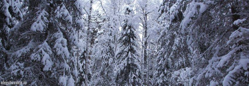 Новый год, лес, фото, красота, новогодние рассказы, Чехов, 1883-1887 годы