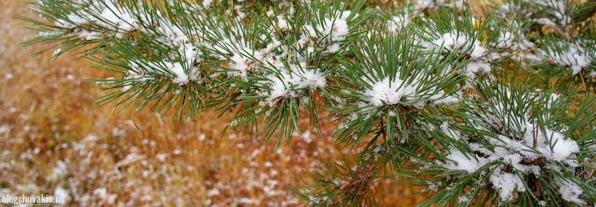 Первый снег, Олег Чувакин, рассказ Чёрные снежинки, лиловые волосы