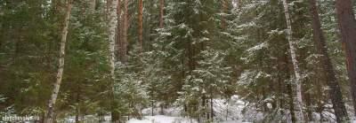 Зимний лес, деревья, снег, рассказ Дед Мороз 2017 года, Олег Чувакин