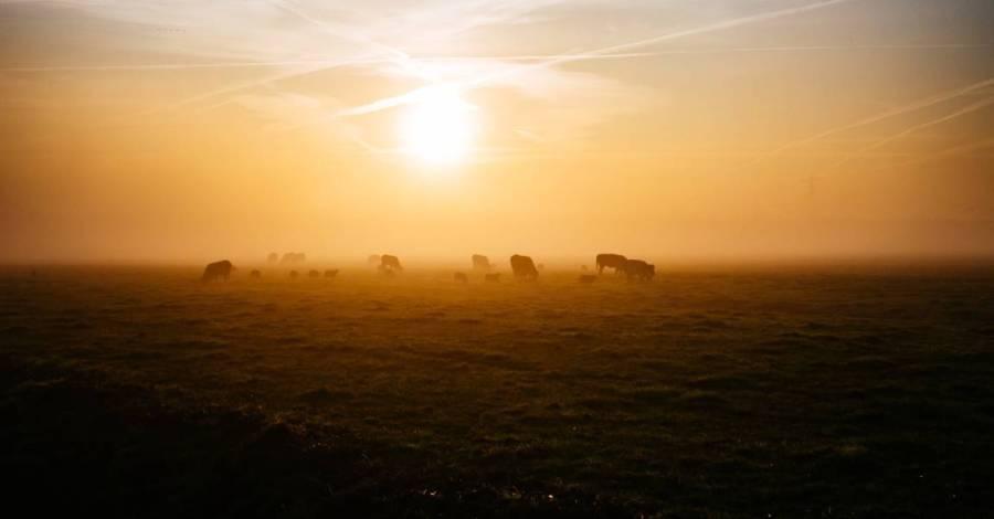 Кони, степь, закат, фото