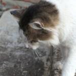 Кот Зизя, любопытный, 8 сентября 2017 года