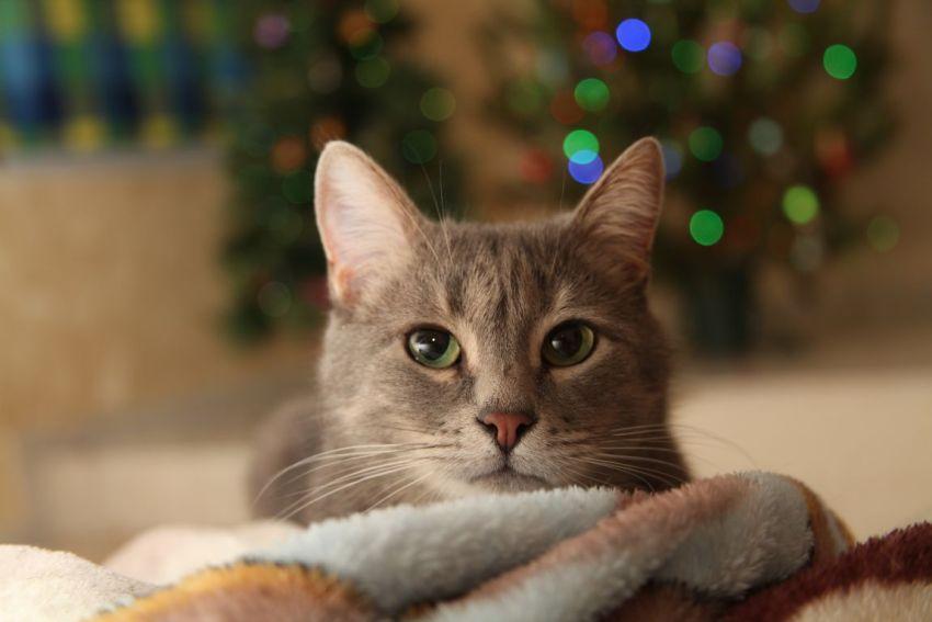 Новый год, кот, полосатый, ёлка, зелёные глаза, взгляд, призрак