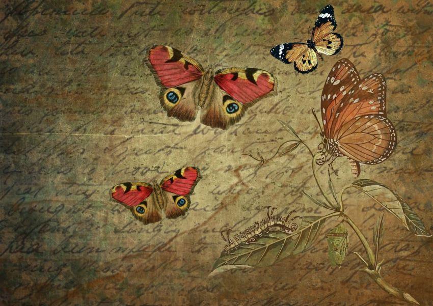 Текст, бабочки, эволюция, автор, русский язык, Даль, словарь, литература, Набоков