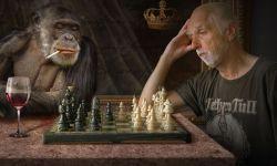 Стратегия, композиция, шахматная доска, писатель, обезьяна, ошибки начинающих авторов