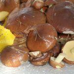 Маслята, грибы, фото