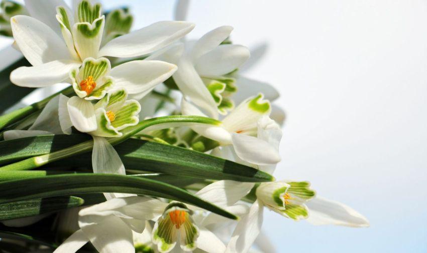 Букет подснежников, весна, день поэзии, стихи