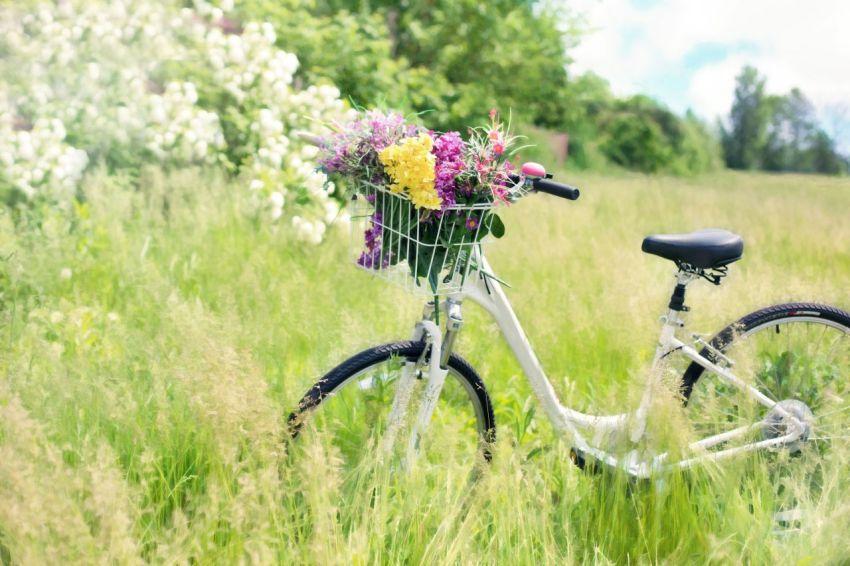 Велосипед, луг, разнотравье, букет луговых цветов
