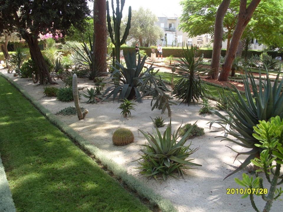 Кактусы и алоэ Бахайских садов