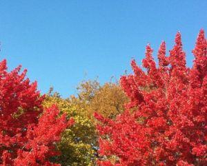 Colores de otoño de la costa este de Estados Unidos