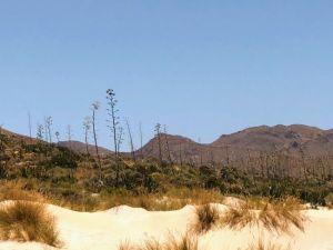 Vegetación típica de Cabo de Gata