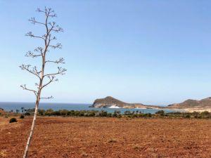 Los Genoveses en el Parque Natural de Cabo de Gata