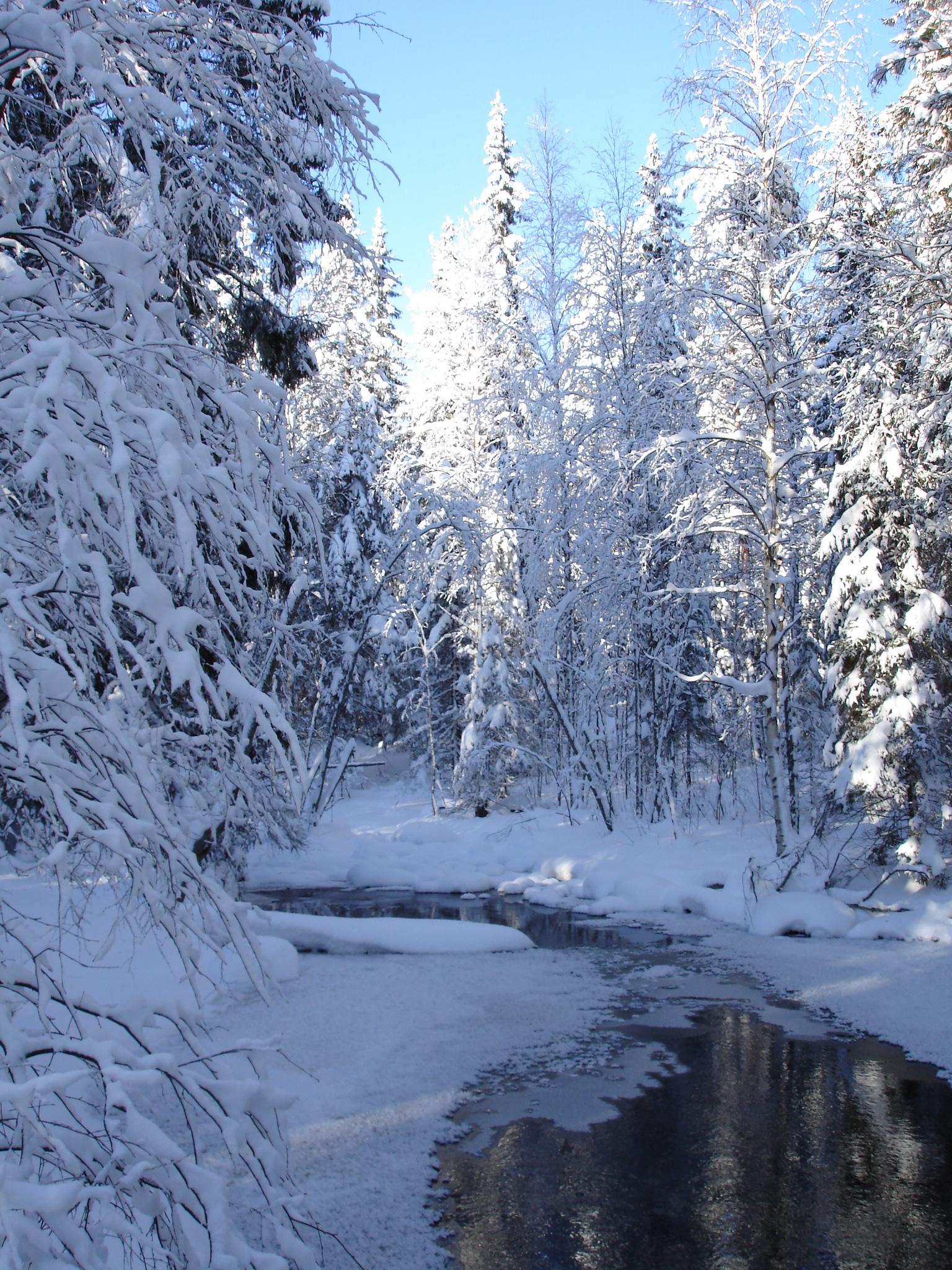 Snow Wallpaper Hd Talvi Mets 228 Ss 228 Olemme Puutarhassa