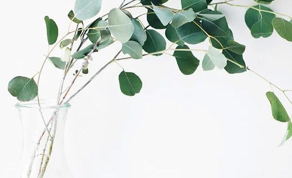 eukalüpti aroomiõli
