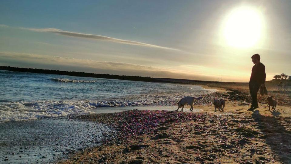 Paseo en la playa con los perros