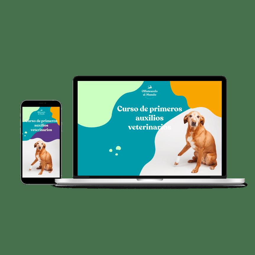 Curso primeros auxilios veterinarios Olfateandoelmundo