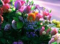 flori-superbe-de-primavara_113199b829f53f