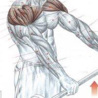Кинезитерапия. Дельтовидная мышца.